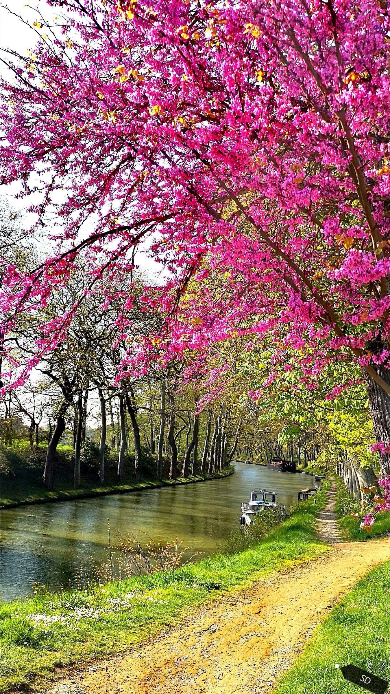 Canal du Midi-printemps-sdesgroux
