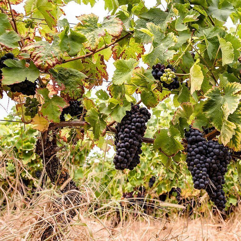 Vignobles et chateaux- Fronton et Castelnau ©LoïcBel