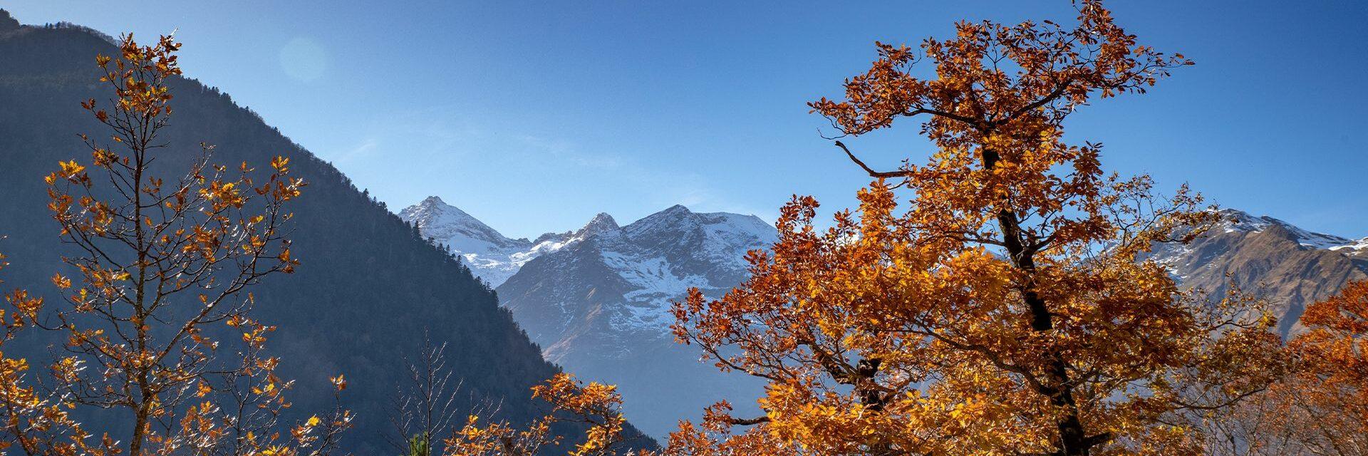 Pyrénées-automne-orange