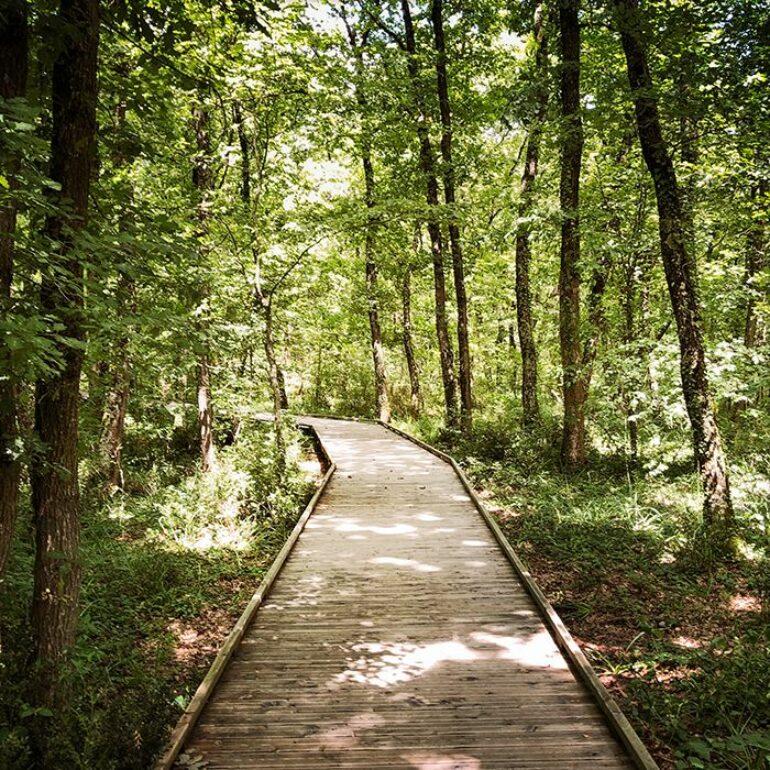 Chemin dans la forêt de Buzet
